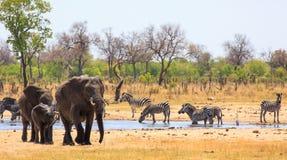 Bezige waterhole met olifanten en zebras in het Nationale Park van Hwange, Zimbabwe stock afbeelding