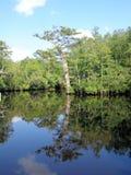 Bezinning bij de Kreek van de Rijst in Noord-Carolina Stock Foto