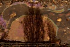 Bezinning in de vloeistof met olie royalty-vrije stock afbeeldingen