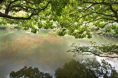 Bezinning door de Vijver in Japanse Tuin Stock Foto's