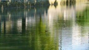 Bezinning over het water van een kanaal stock videobeelden