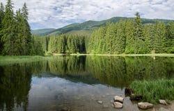 Bezinning over meer in bos Stock Afbeeldingen