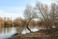 Bezinning van bomen Royalty-vrije Stock Fotografie