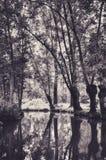 Bezinning van Bomen in het Water van Marais Poitevin Stock Fotografie
