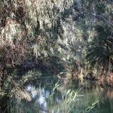 Bezinning van bomen op een meer Stock Foto's