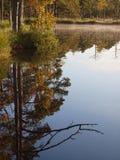 Bezinning van bomen op een moerasmeer Royalty-vrije Stock Foto