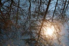Bezinning van bomen in water en heldere zon als achtergrond stock fotografie