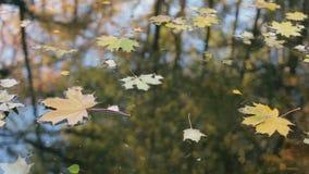 Bezinning van bomen in water Gele en oranje bladeren op de vijver stock video