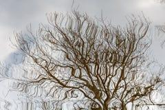 Bezinning van boomtakken gebreken beeld van boomtakken stock foto's