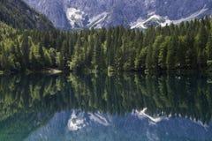 Bezinning van bos in meer Royalty-vrije Stock Foto's