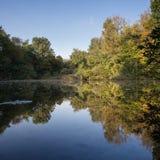 Bezinning van bos in meer Royalty-vrije Stock Fotografie
