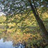 Bezinning van bos in meer Royalty-vrije Stock Afbeeldingen