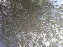Bezinning van de boom Stock Afbeeldingen