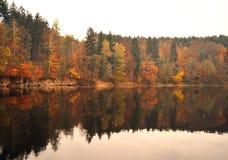 Bezinning van de herfstbos in het water Royalty-vrije Stock Afbeelding