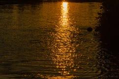 Bezinning van de stralen van de het plaatsen zon op de oppervlakte van het water De textuur van het water Natuurlijke achtergrond royalty-vrije stock afbeeldingen