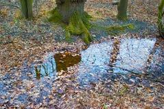 Bezinning van een boom in een kreek Stock Foto