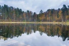 Bezinning van een bos in een stil meer royalty-vrije stock afbeelding