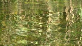 Bezinning van groene installaties in water stock footage