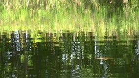 Bezinning van groene installaties in water stock videobeelden