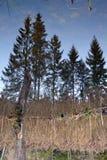 Bezinning van het bos royalty-vrije stock fotografie