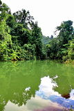 Bezinning van het bos op een meer in een berg royalty-vrije stock foto