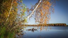 Bezinning van het de herfst de bosmeer Meer in Mooi de herfstbos Stock Afbeelding