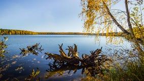 Bezinning van het de herfst de bosmeer Meer in Mooi de herfstbos Royalty-vrije Stock Afbeeldingen