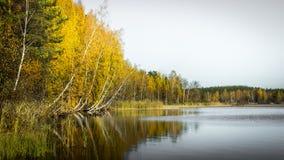 Bezinning van het de herfst de bosmeer Meer in Mooi de herfstbos Royalty-vrije Stock Afbeelding