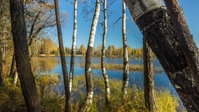 Bezinning van het de herfst de bosmeer Meer in Mooi de herfstbos Stock Foto