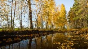Bezinning van het de herfst de bosmeer Meer in Mooi de herfstbos Royalty-vrije Stock Foto's
