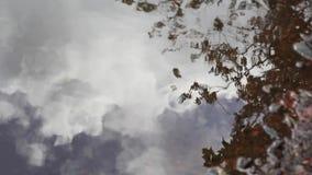 Bezinning van installaties en de hemel in water stock footage