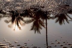 Bezinning van kokospalm op het water Stock Afbeeldingen