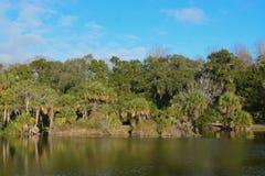 Bezinning van oever in Kathryn Abbey Hanna Park, Duval-Provincie, Jacksonville, Florida royalty-vrije stock afbeelding