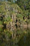 Bezinning van oever in Kathryn Abbey Hanna Park, Duval-Provincie, Jacksonville, Florida royalty-vrije stock afbeeldingen