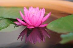 Bezinning van waterlily Royalty-vrije Stock Afbeeldingen