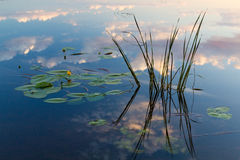 Bezinning van wolken in het water met waterlelies Stock Fotografie