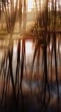 Bezinningen en zonnestraal in het bos Stock Foto's