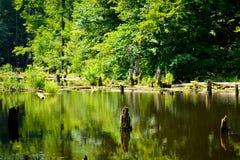 Bezinningen in het meer Stock Afbeelding