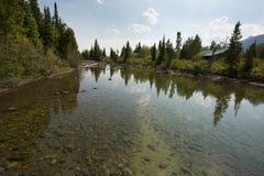 Bezinningen over Cottonwood-Kreek, dichtbij Jenny Lake, Jackson Hole, royalty-vrije stock afbeeldingen