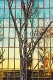 Bezinningen van bomen op een weerspiegelend gebouw bij schemer Royalty-vrije Stock Afbeelding