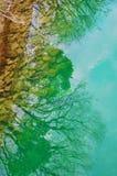 Bezinningen van boom in het meerwater stock foto