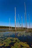 Bezinningen van het Meer van de Bomen van waterlelies de Blauwe Verticale Stock Fotografie