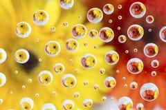 Bezinningen van oranje en gele bloem in veelvoudig klein water stock foto's