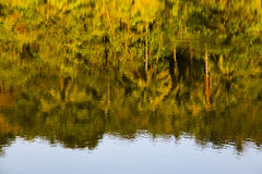 Bezinningsbomen in duidelijk water Eiland Koh Samui, Thailand Royalty-vrije Stock Foto's
