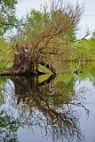 Bezinningsboom Stock Foto's
