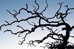 bezlistna drzewna zima fotografia stock