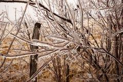 Bezlistne gałąź obramowane w lodzie Obraz Stock