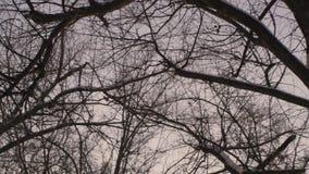 Bezlistne gałąź w zima parku Gładki panning Zakończenie zdjęcie wideo