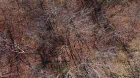 Bezlistni drzewa w zimie z góry zdjęcie wideo