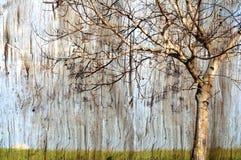 Bezlistny drzewny tło fotografia stock
